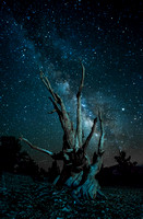 Ancient Bristlecone Pine Forest - Bishop California
